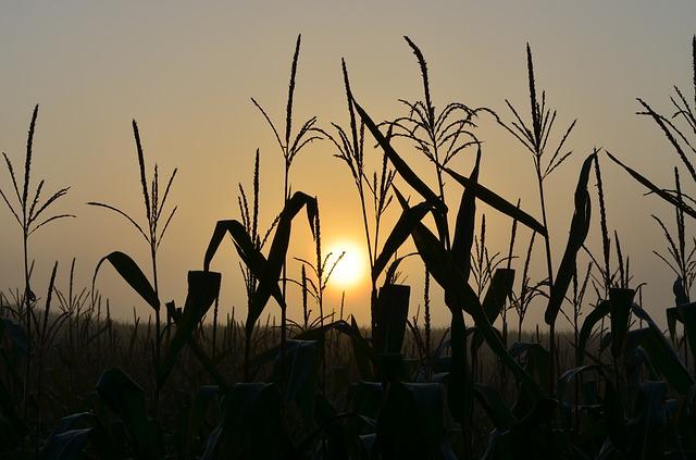 sunrise-429902_640