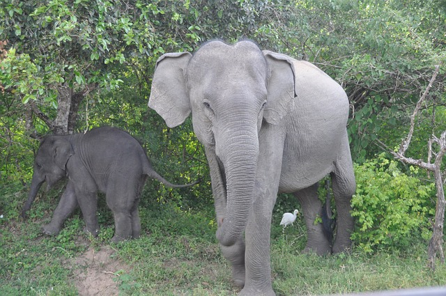 elephant-70366_640
