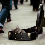 kitty-491013_640