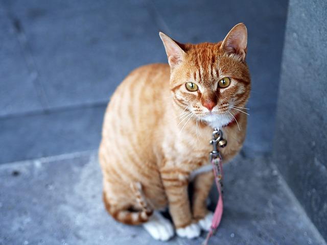 cat-360807_640