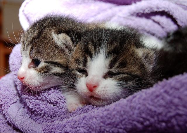 cat-205757_640