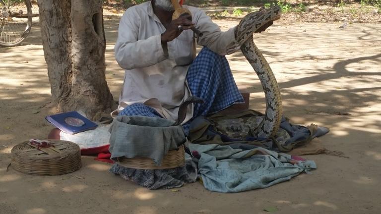 インド アナコンダ コブラ